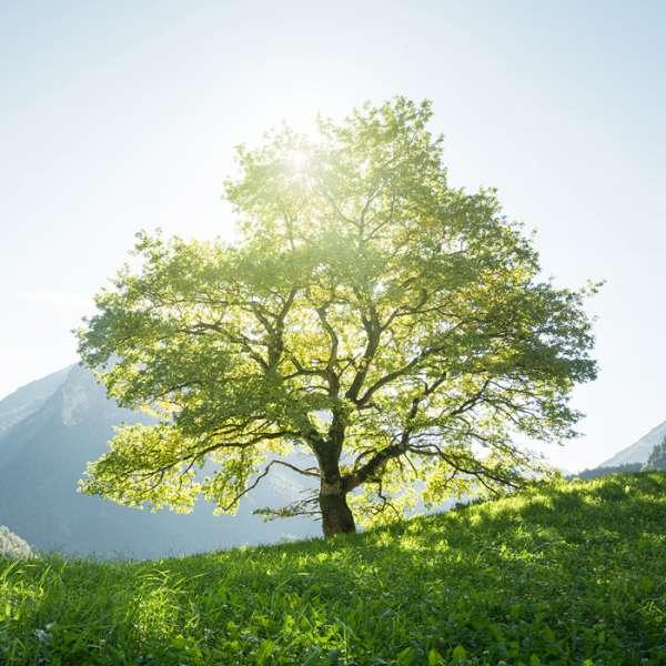 MPS Myelom Patienten Schweiz – Baum